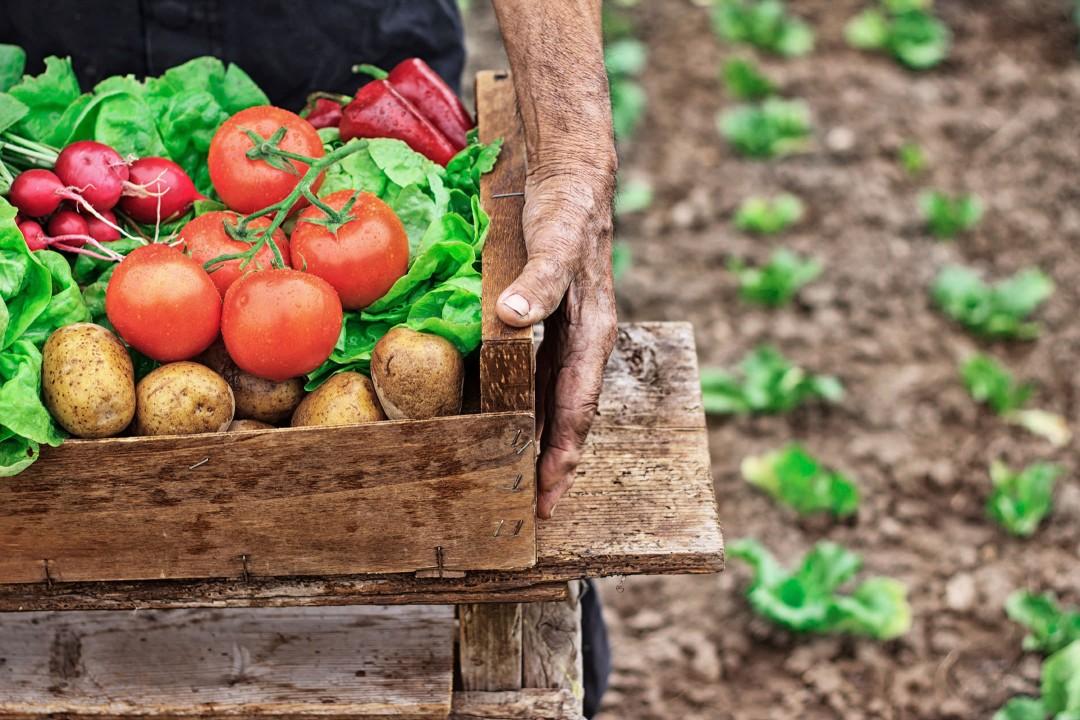 Mann som bærer kasse med økologisk mat